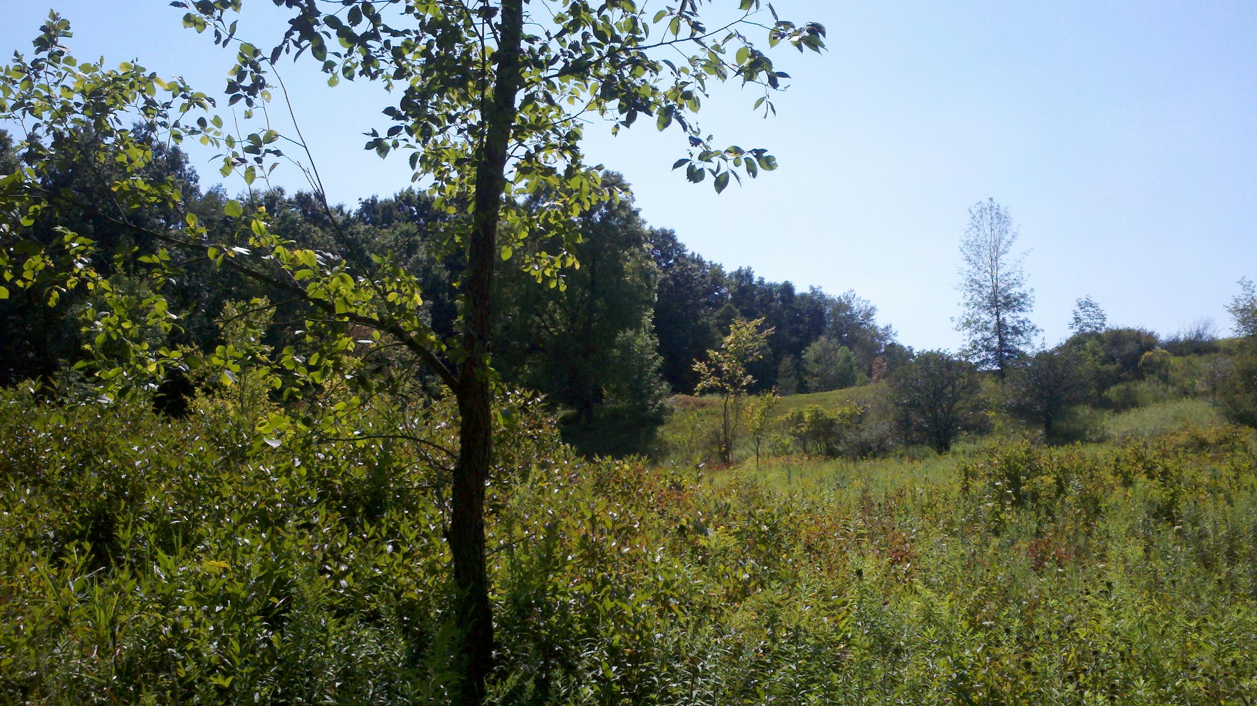 Ridgeline 1 at Sleepy Hollow